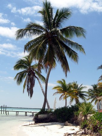 Cayo Guillermo, Kuba: Crossed palms
