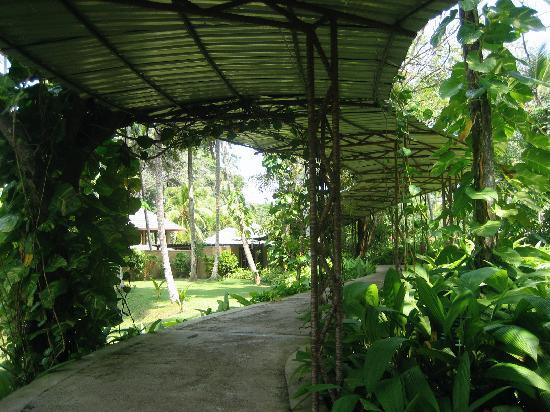 The Palms Hotel: Path