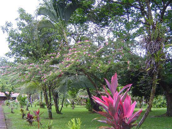 Hotel Ilan-Ilan Trails & Lodge: Jardin superbe