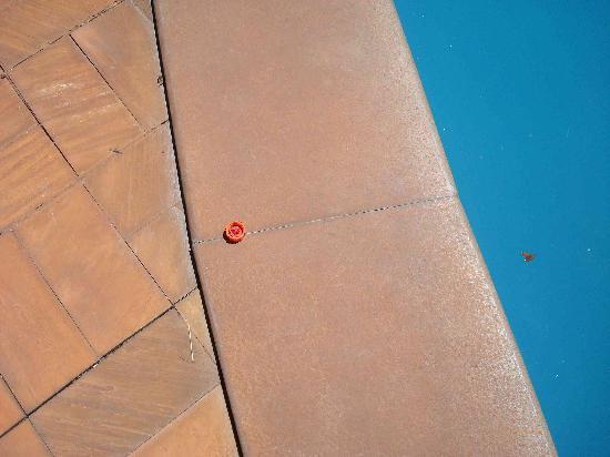 Hotel Margay : Esta tapita estuvo en el borde de la pileta 24 HOras los encargados le pasaban por al lado y no