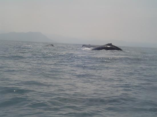 Decameron Los Cocos : Whale watching