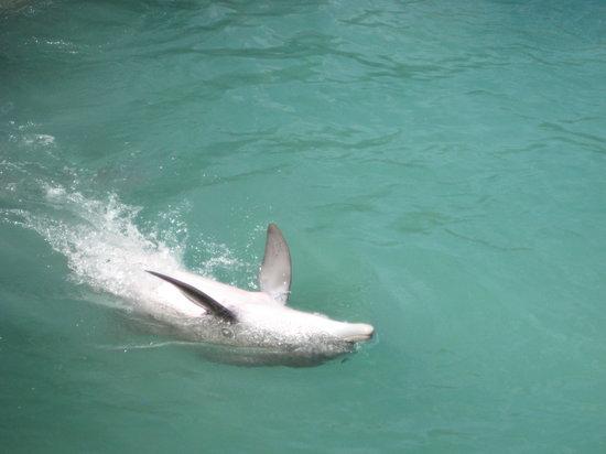 Dolphin Cove Feb 2008