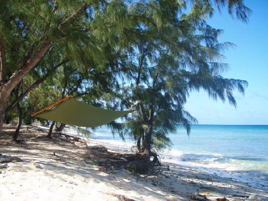 Tradewind Guest Suites on Salt Cay: Hammock behind Tradewinds
