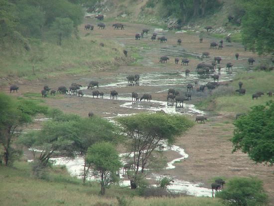 Tarangire Safari Lodge: Vue de la terrasse le matin