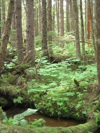 Juneau Rainforest Garden: Beautiful tropical forest and small stream