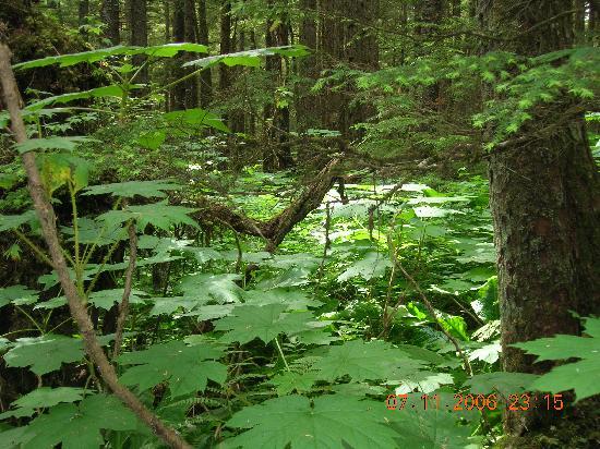 Juneau Rainforest Garden: Forested Area