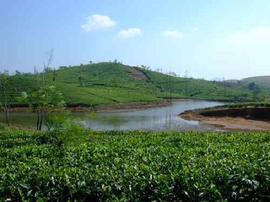 Western Ghats: Teeanbau in Vagamon