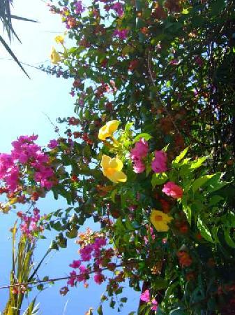 Western Ghats: Blumen am Straßenrand