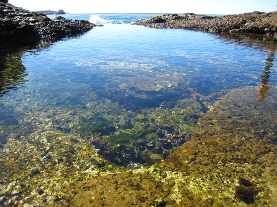 Point Lobos State Reserve: Tide pools