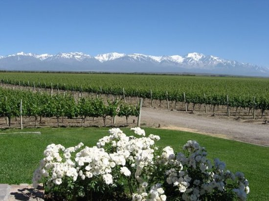 Mendoza, Argentina: View from Winery