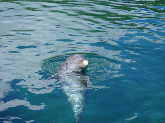 Dolphin at Xel-Ha