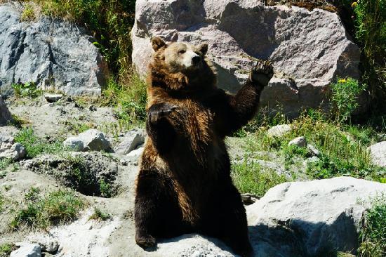 Hebertville, Canada: zoo St Felicien - Ours