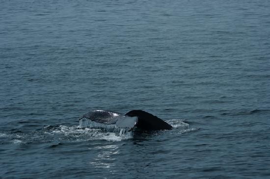 La Maison Gauthier : Escursion aux Baleines