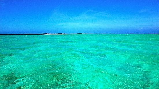 Turneffe Flats: Turneffe Atoll shallows