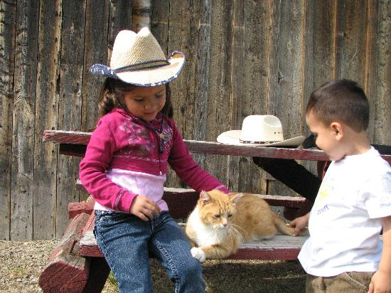 Vee Bar Guest Ranch: Love the barn cats