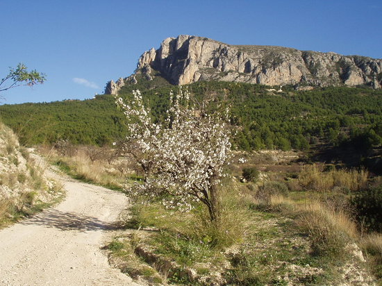 Calpe, Ισπανία: Olta mountain from Finca Sierra Olta