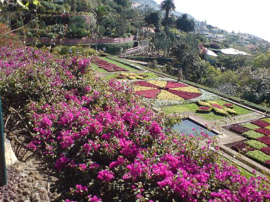 Madeira Regency Cliff: the botanical gardens at monte