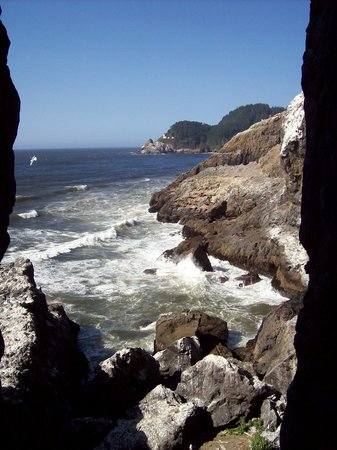 Florence, OR: Sea Lions looking out the caves
