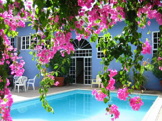 The Blue House Boutique Bed & Breakfast: Flowers and Pool at Blue House