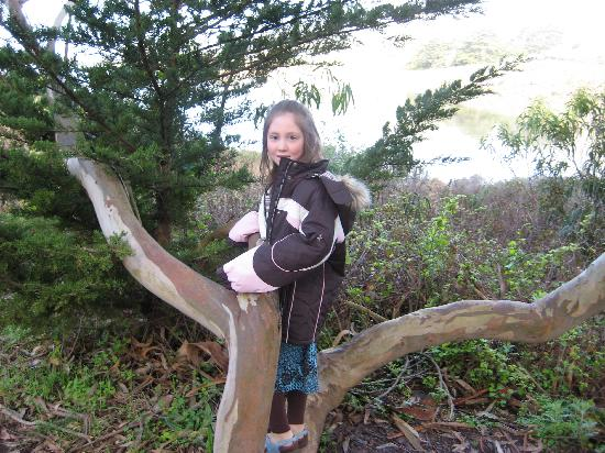 HI Marin Headlands Hostel: Tree on Hiking Trail