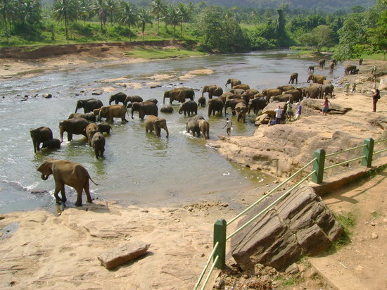 Jetwing Beach: Elephant Orphanage