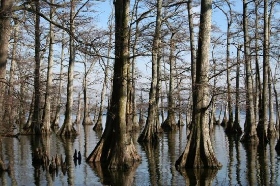 Short boardwalk/fishing area - Picture of Reelfoot Lake State Park