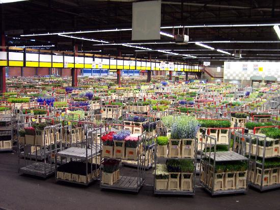 Royal FloraHolland Aalsmeer: After the auction; flowers will be shipped worldwide!