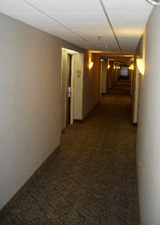 Hampton Inn Clarks Summit: Hallway