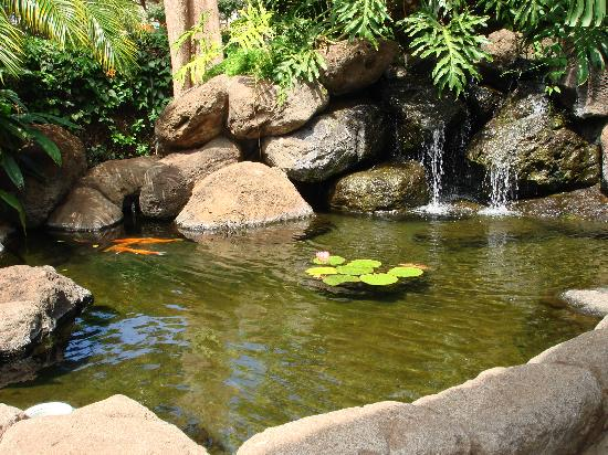 Kahana Falls: Koi Pond just outside our front door