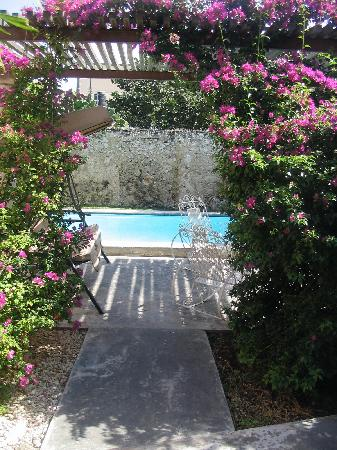 ‪‪Casa Santiago‬: the bouganvilla blooming by the pool‬