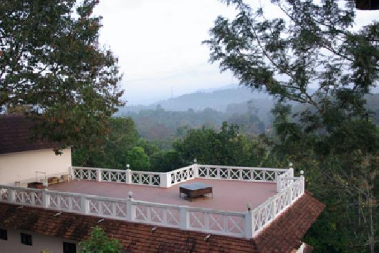 Hotel Treetop: treetop roof