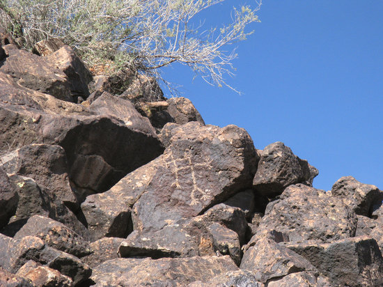 Deer Valley Petroglyph Preserve: Have fun spotting the 1500 Petroglyphs