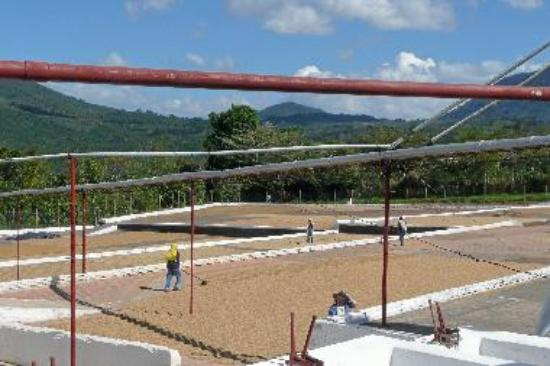 During the Coffe tour - Drying the coffee beans