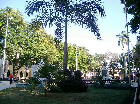 Bayamo, Cuba: Palm in the park