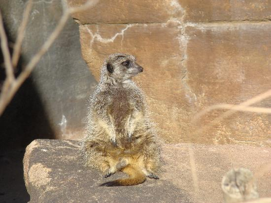 Sedgwick County Zoo: Another favorite