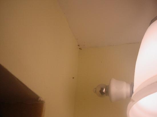 Rodeway Inn & Suites: Bugs