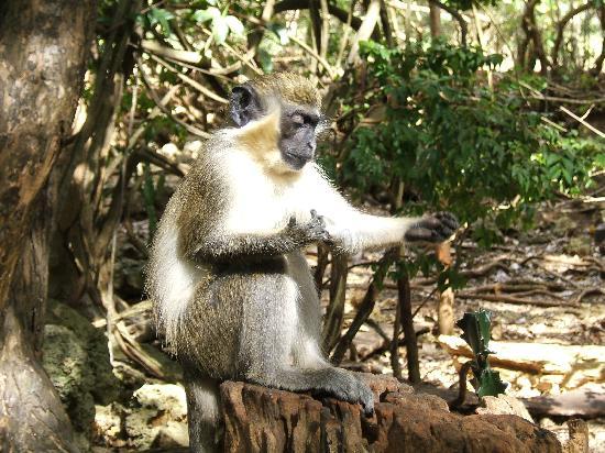 Bajan Breeze Guest House: Barbados Wildlife reserve