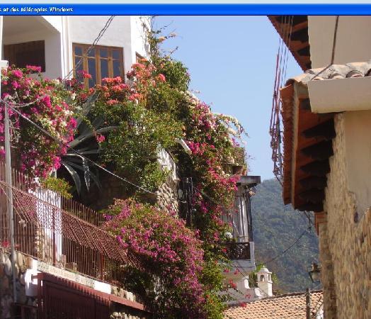 Crown Paradise Club Puerto Vallarta: Une ruelle fleurie de Purto Vallarta