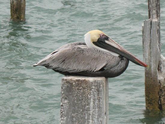 Treasure Island, FL: Resting...