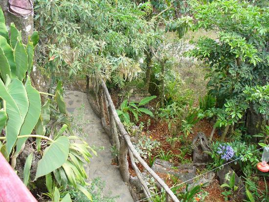 Hotel Jardines de Monteverde: Les jardins vue du balcon de notre chambre