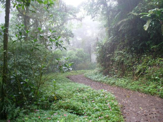 Hotel Jardines de Monteverde: Rainforest