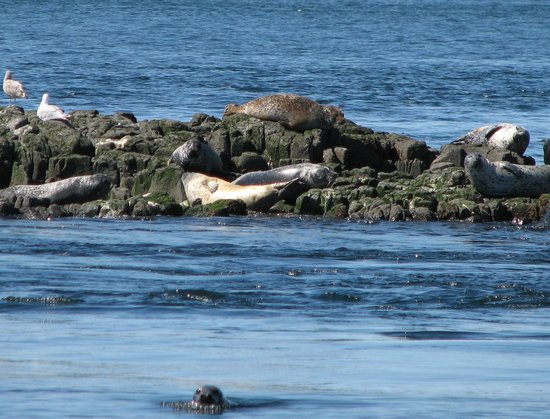 Seals off Brier Island