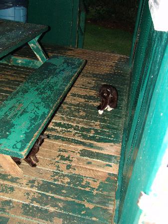Waianapanapa State Park Cabins: Deck