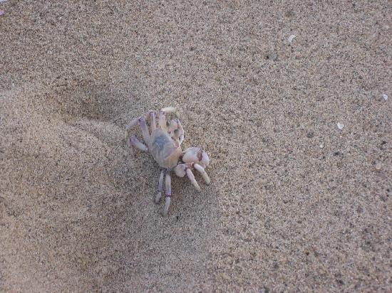 Illovo, South Africa: A local beach inhabitant