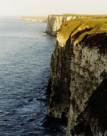 Stables Bed & Breakfast: Bempton Cliffs