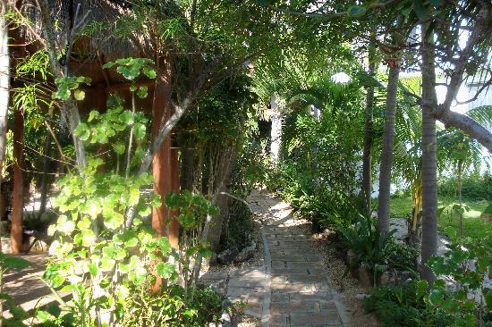 Villas Punta Sur : path to villa