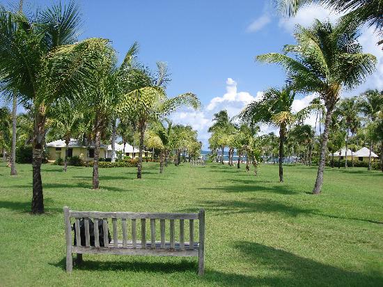 Nisbet Plantation Beach Club: View towards the beach
