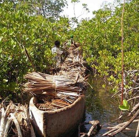 Watamu, Kenya: Mida, Mangrove channels