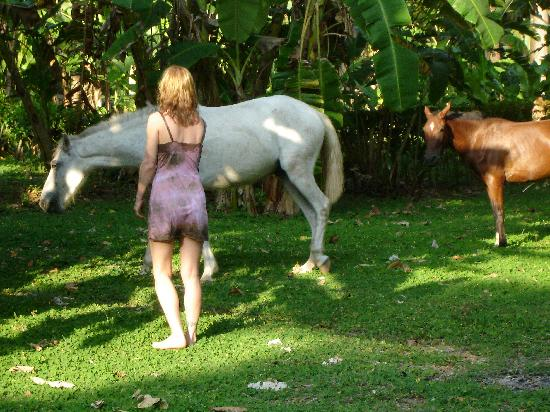 Lookout Inn Lodge: horses that roam the beach/yard