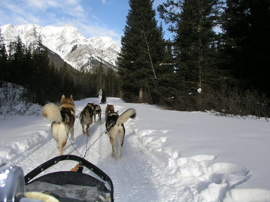 Snowy Owl Sled Dog Tours: Onward Ophelia, Hendrix, Excalibur, Chaos, Poseidon and Tamarack!